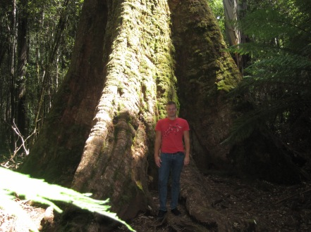 Standing by a HUGE Tree in the Rainforest
