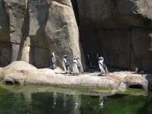 SP Aquarium penguins