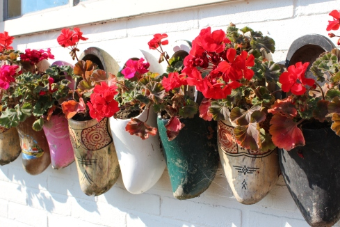Clogs Used as Flower-Pots