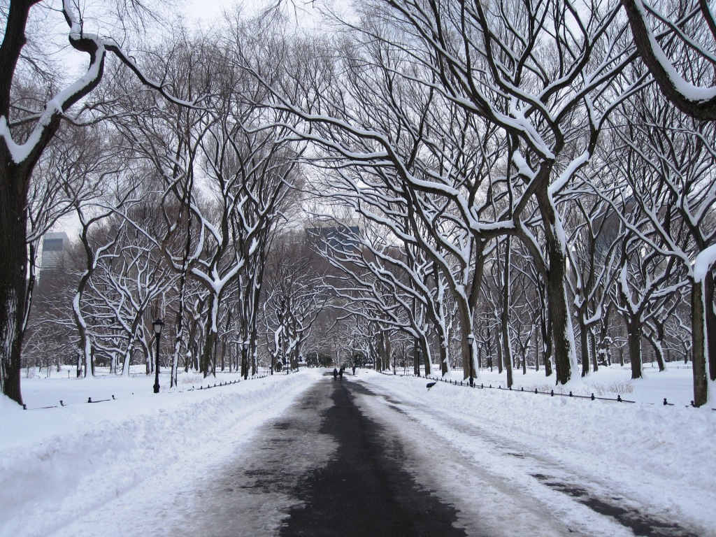 Central Park - January 2011